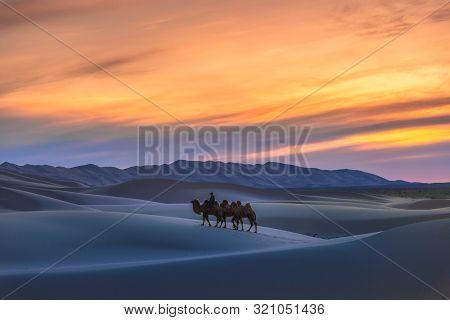 Gobi Desert, May 2019, Mongolia : Camel Going Through The Sand Dunes On Sunrise, Gobi Desert Mongoli