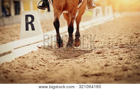 Legs Of A Sports Horse Galloping In The Arena.