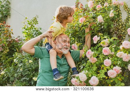 Grandfather Carrying His Grandson Having Fun In The Park At The Summer Time. Father Giving Son Ride