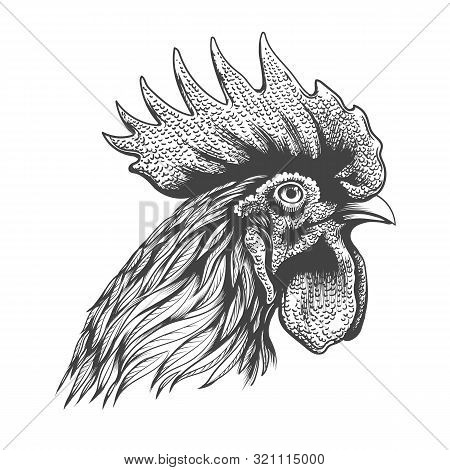 Rooster Head Engraving. Hand Drawn Cock Portrait Silhouette Vector Illustration, Rooster Chicken Ban