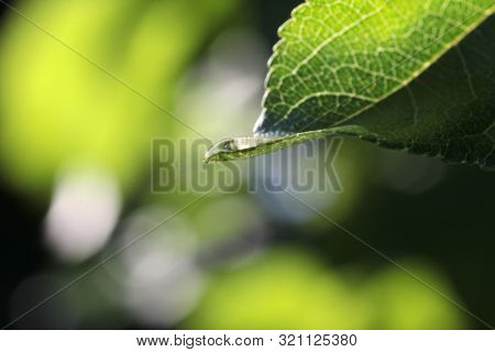 Raindrops on green leaves of trees in the park