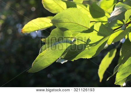 Green leaves of trees in park on dark background
