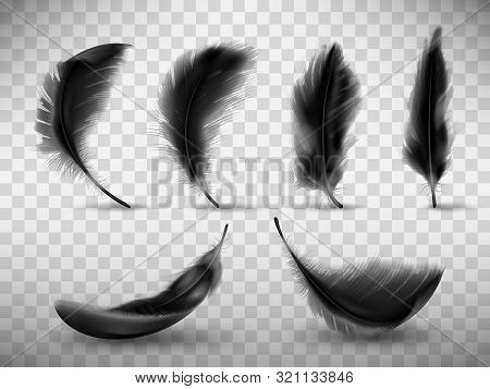 Black Fluffy Feather With Shadow Vector Realistic Set Isolated On Transparent Background. Feathers F