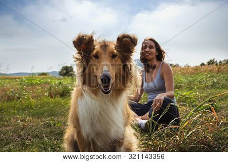 Woman With Scotch Collie Dog In Meadow. Woman Sitting With Scotch Collie Dog In Nature. Close Up Of