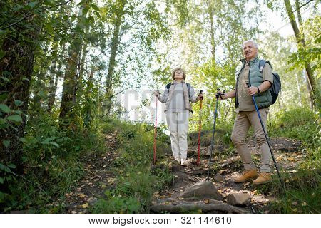 Happy active seniors enjoying trekking trip in the forest while standing on hill and lookng at nature