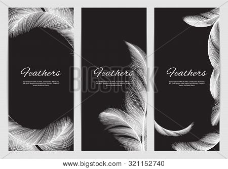 Feathers Banners Template. Realistic White Swan Falling Feathers Vector Background. Promo Banner And
