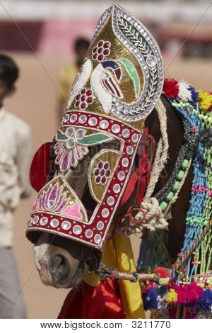Indian Festival Horse