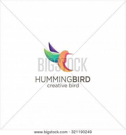 Humming Bird Logo Design Creative Sign . Colorful Colibri Bird Logo Icon Design