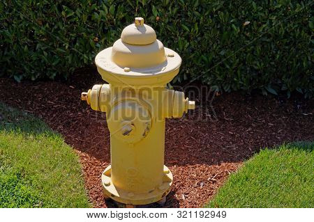 A Fragment Of The Garden. Yellow Fire Hydrant.