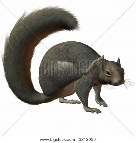 3 D Computer Render of an Squirrel poster