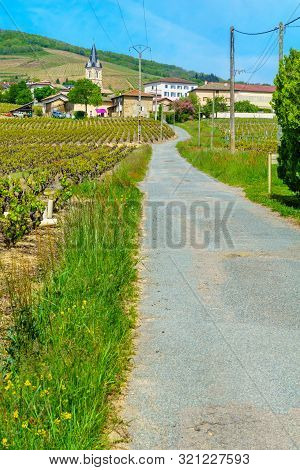 Landscape Of Vineyards And Countryside In Beaujolais, With The Village Quincie-en-beaujolais. Rhone