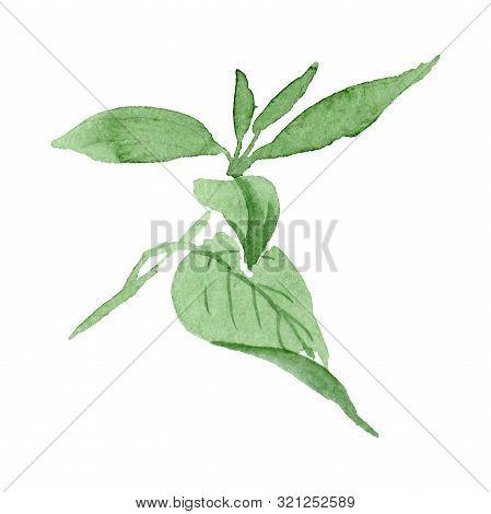Fuchsia Leaf Floral Botanical Flower. Watercolor Background Set. Isolated Fuch Sia Illustration Elem