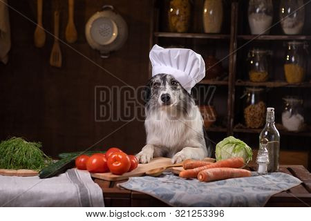 Dog In The Kitchen With Vegetables. Nutrition For Animals, Natural Food. Border Collie In Cooking Ha