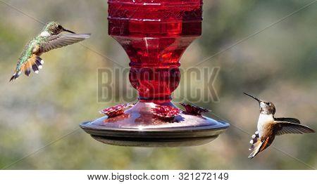 Two Hummingbirds Face Off On Either Side Of A Feeder.