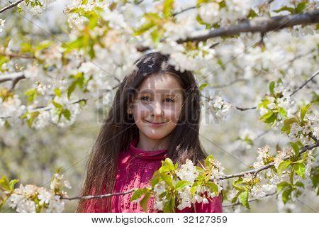 in a blossom cherry garden