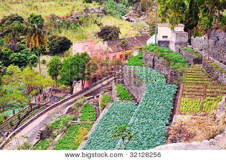 Farm In Cape Verde Island Of Sao Antao
