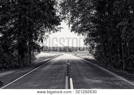 A Lonely Road Leads Winding To The Horizon Under The Tree Branches At The Rural Finland. The Road Le