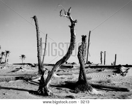 Dead Palms