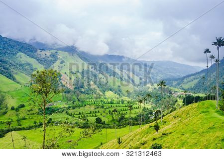 View On Wax Palm Trees Of Cocora Valley Next To Salento, Colombia