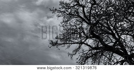 Silhouette Dead Tree And Branch On Grey Sky Background. Black Branches Of Tree. Nature Texture Backg