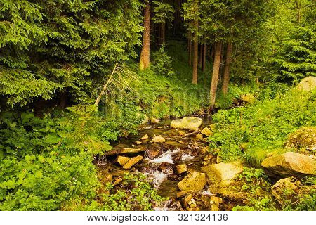 The Source Of The Prut River In The Carpathian Mountains. Tourist Route To Mount Hoverla. Beautiful