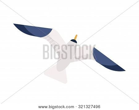 Flying Seagull Flat Vector Illustration. Gliding Gull With Spread Wings Minimalistic Sign. Marine Bi