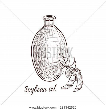 Vector Drawing Soybean Oil, Bottle Of Vegetable Oil And Soya Bean, Hand Drawn Illustration