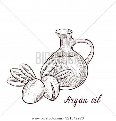 Vector Drawing Argan Oil, Bottle Of Vegetable Oil And Nuts Of Argania , Hand Drawn Illustration