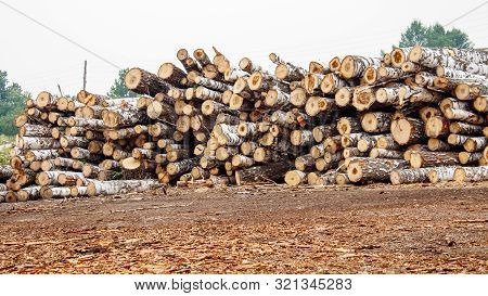 poster of birch logs ready for transportation in logging in russian siberia outdoor on summer day