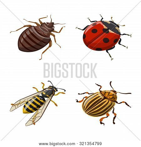 Isolated Object Of Insect And Fly Sign. Set Of Insect And Entomology Stock Symbol For Web.