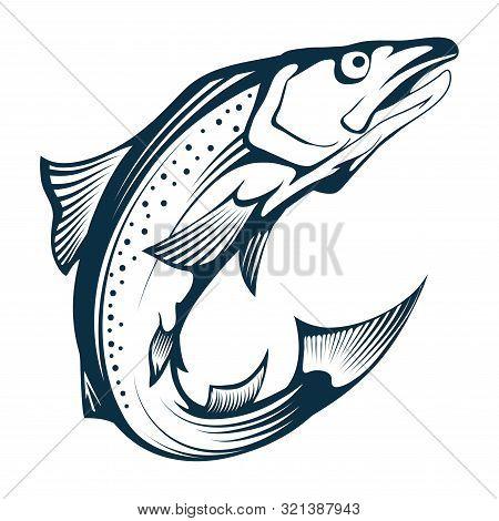 Salmon Fish. Hand Drawn Sketch Salmon On White Background. Whole Atlantic Salmon. Sea Fish. Fresh Wh
