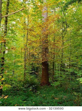 Colors In The Wood