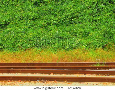 Railroad Tracks In Georgia