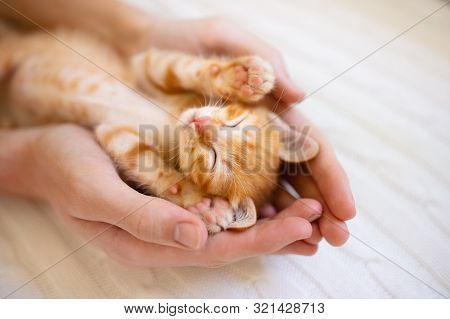 Kitten Sleeping In Man Hands. Cats Sleep.