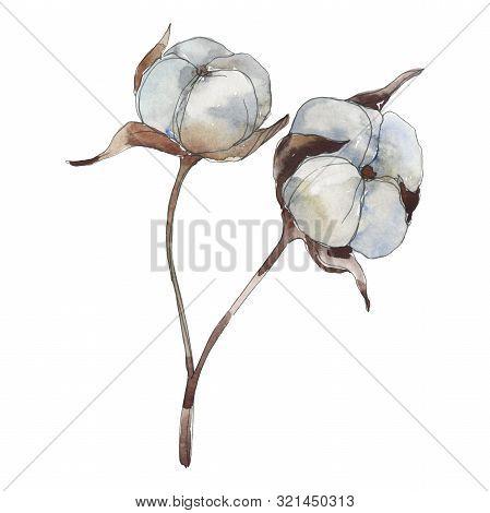 White Cotton Floral Botanical Flowers. Watercolor Background Illustration Set. Isolated Cotton Illus