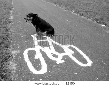 some things in life are a challenge; teaching a dog to ride a bicycle is one of them. poster