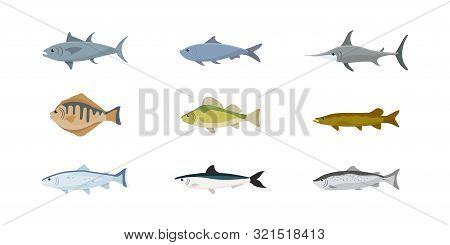Fish Flat Illustrations Set. Saltwater And Freshwater Fish Sorts Isolated Cliparts Pack. Lake, River