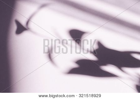 Tree Leaves Shadow On Wall Background, Abstract Background Cement Wall Shadow Light Concept, Shadow