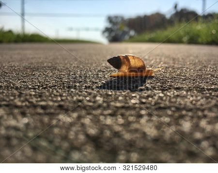 Slow Snail Crossing the Road Beautiful backlit sunny summer day