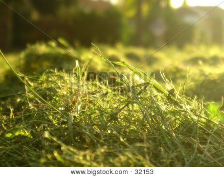 macro of freshly cut grass. poster