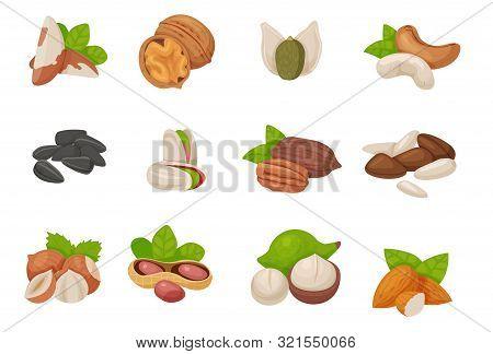 Cartoon Nuts Set - Hazelnut Almond Pistachio Pecan Cashew, Brazil Nut, Walnut, Peanut, Coconut, Pump