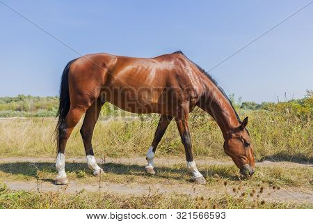 Horse Steed Eats Grass By The River