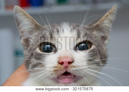 The Effect Of Atropine Injection In Cat Before The Surgery. The Sympathetic System Increases Heart R