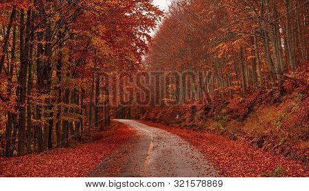 Autumn Fantasy With Colorful Forest On The Road While Traveling. Kastoria, Greece.