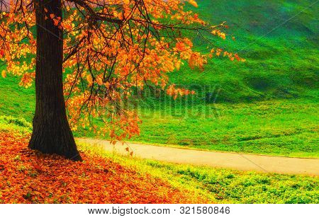 Autumn landscape. Autumn park tree and fallen autumn leaves on the ground in the park alley in cloudy autumn October day. Cloudy autumn landscape view
