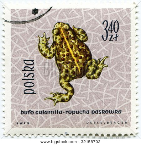 POLAND - CIRCA 1963: Polish stamp shows Bufa calamita (Natterjack Toad), series devoted to reptiles and amphibians, circa 1963