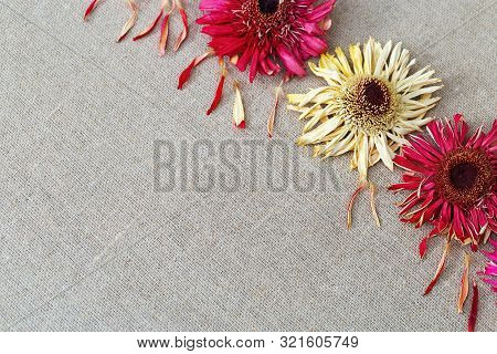 Natural Background With Dry Flowers Gerbera On Linen Cloth For Greeting Card Or Fon. Three Dry Flowe