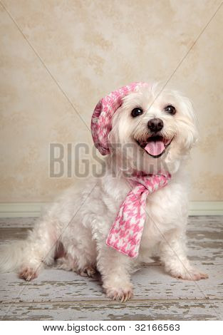 poster of Trendy fashion pooch with matching hat and scarf sitting on a rustic wooden floor.