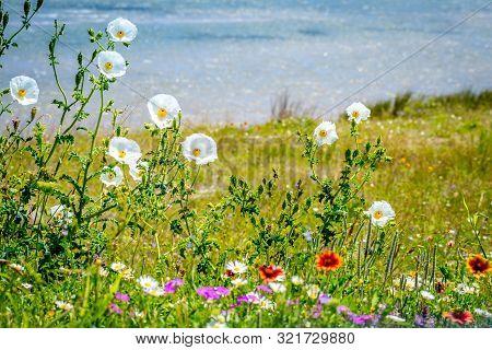 Assorted Type Of Beautiful Wildflowers In Aransas Nwr, Texas