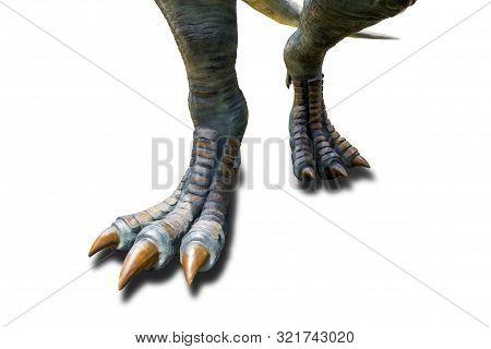 Tyrannosaurus ( T-rex ), Dinosaur Feet Walking Of Tyrannosaurus ( T-rex ) On A White Background.